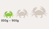 Small Mud Crab Size